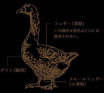 羽毛(ダウンボール)