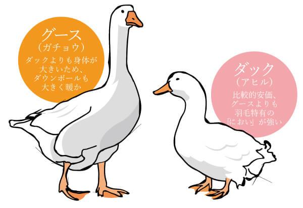 羽毛(ダウン)の違い/ダウンの種類で選ぶ
